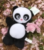 Love Panda celebrating Hanami in Japan